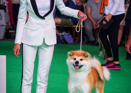 World Dog Show 2018