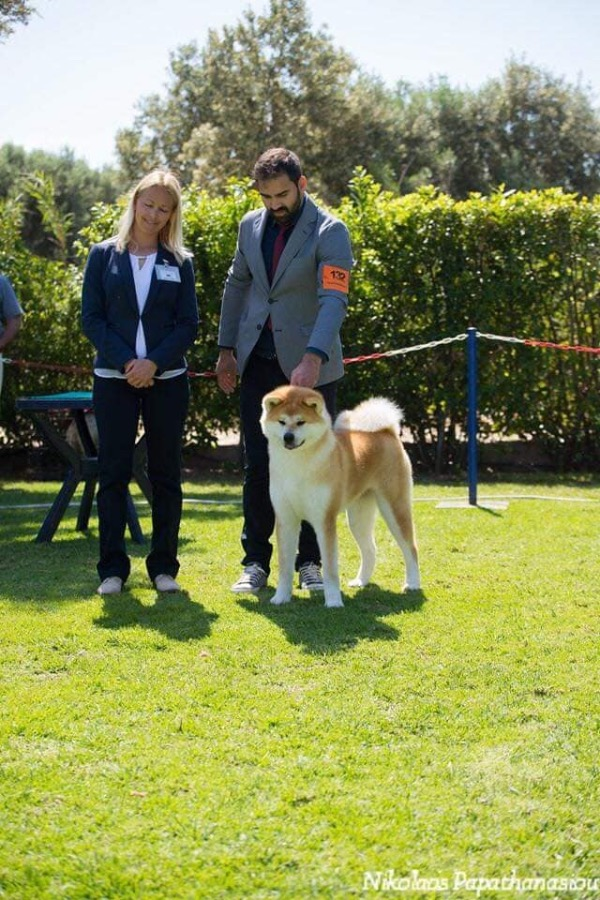 Our Akita TOP Akita of Greece according to the results of 2019