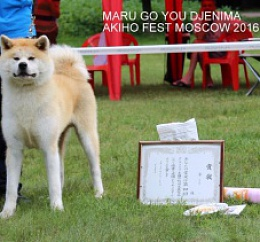 MARU GO YOU DJENIMA