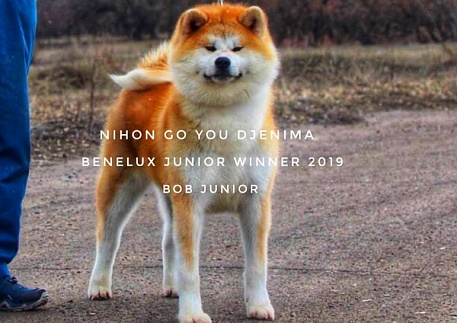 GOLD DOG TROPHY BENELUX WINNER 2019 BELGIUM